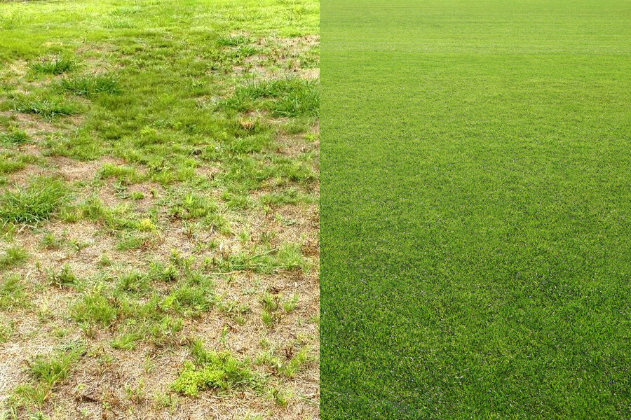 When is the best time to reseed your lawn?
