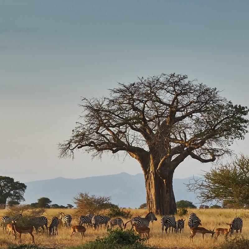 какими обитатели и природа в африке фото карандашом сможем