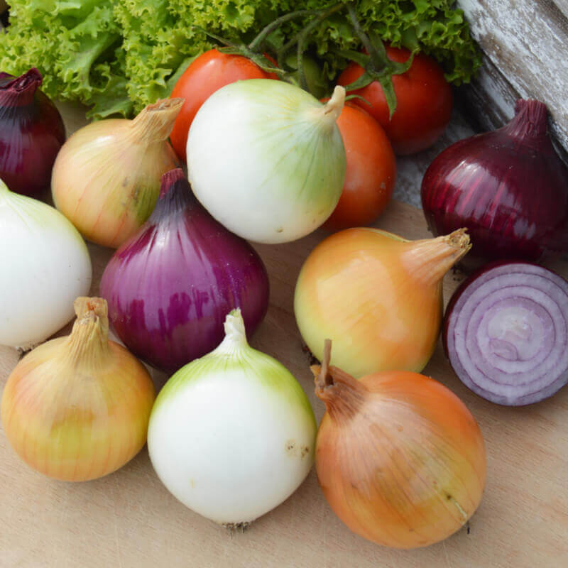 Seeds Of Onion Mix Yellow Red White