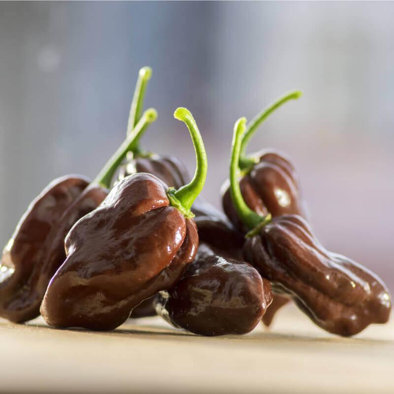 muy picante Habanero chocolate pepper   35 Semillas seeds