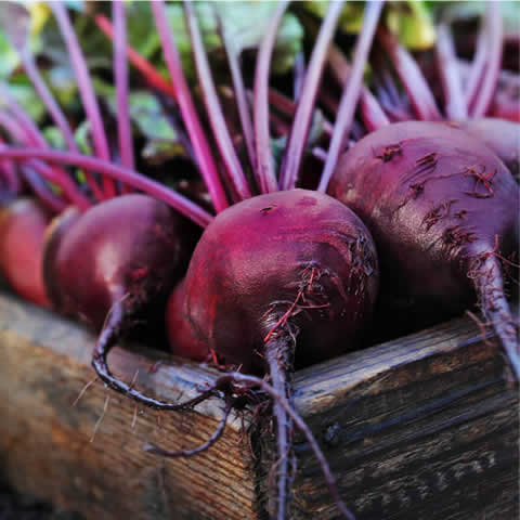 BEETROOT 'Red d'Egypte'