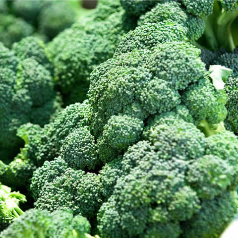 BROCCOLI GREEN 'Calabrese'