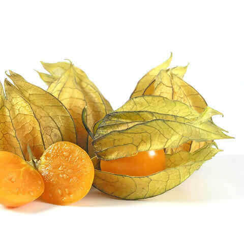 PHYSALIS PERUVIANA - Cape Gooseberry