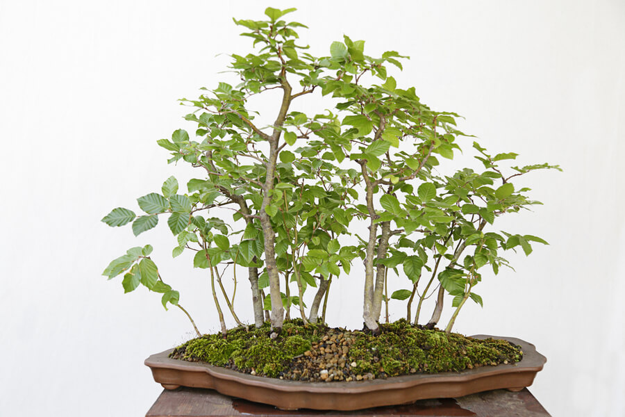 The Magic World Of Bonsai